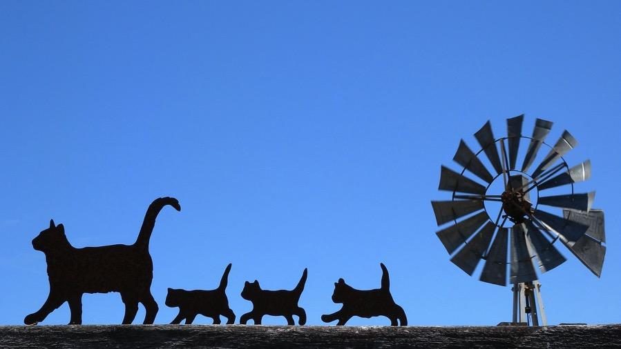 cats-596782_1280.jpg