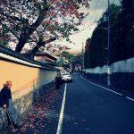 東福寺の紅葉とシフォンケーキと後ろの景色〈京へ西へ。その八〉